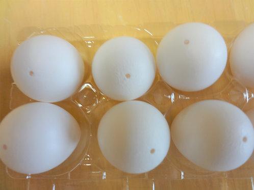 コリンウズラの卵殻5個