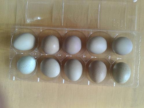 ヒメウズラの卵10個