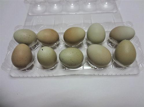 ヒメウズラの卵殻10個(コーティング済み)