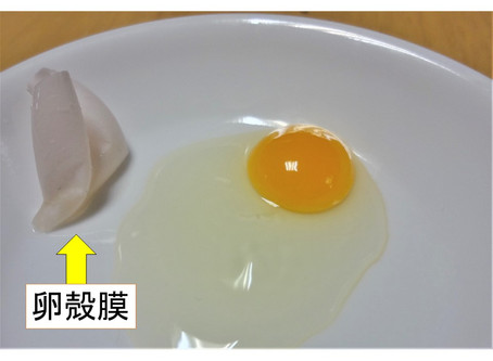 卵殻膜がお肌に良いと注目されてきました。