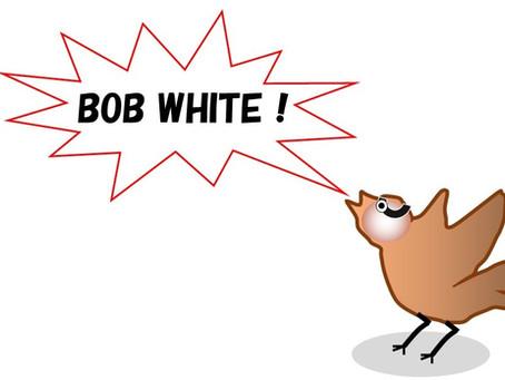 """Bob White""の季節がやってきました。"