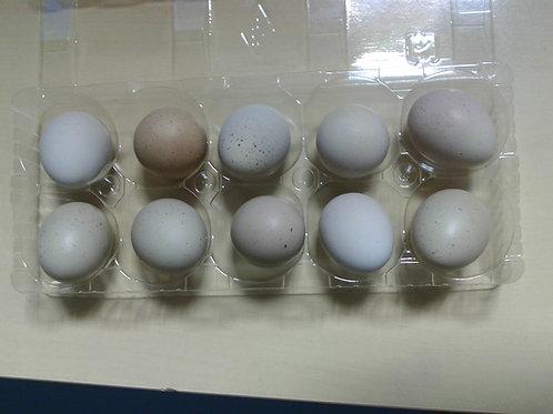 ヒメウズラの孵化用卵5個