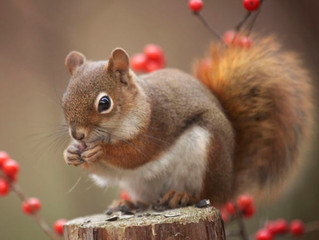 What Can We Learn From The Humble Squirrel