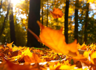 The Rhythm of Loss and Life - An Autumn Poem by Marissa Pendlebury: