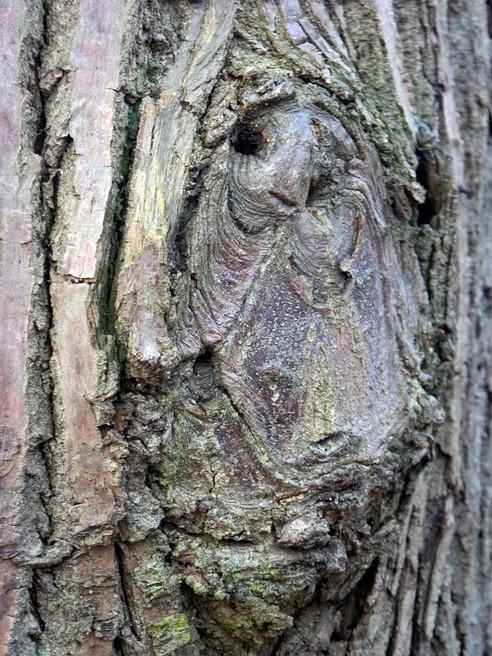 Profil, Saint cucufa , Rueil Malmaison 2007