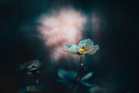fleurs-jardin-5213_2.jpg