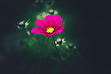 fleurs-jardin-5199.jpg