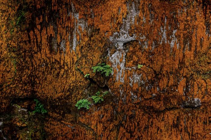 Martinique-0589.jpg