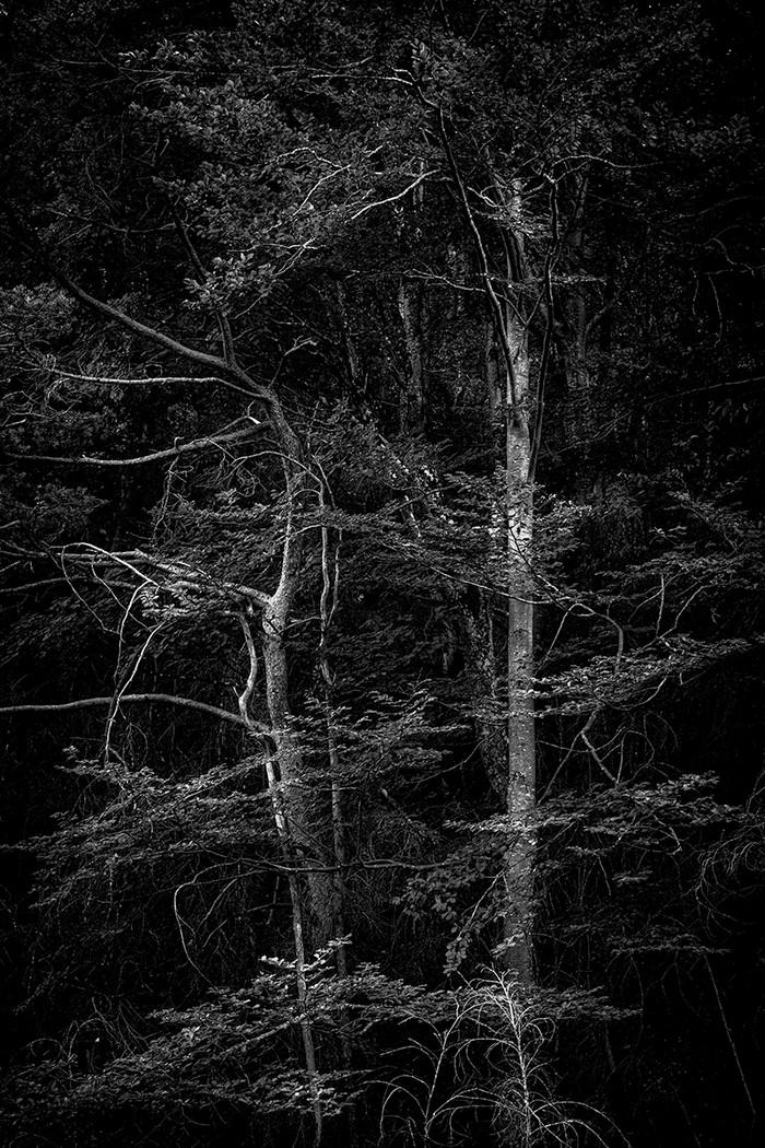 arbres_n&b-2262_Filmpack.jpg