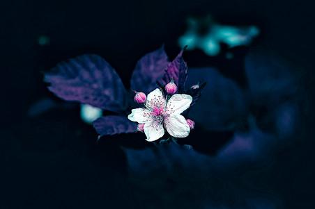 fleur-9963.jpg