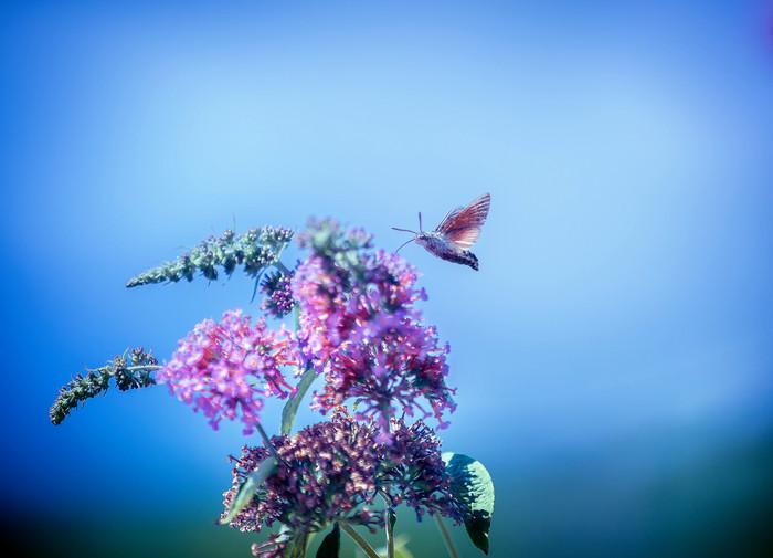 papillon-3139.jpg