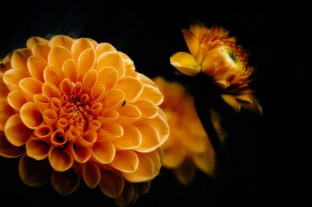 fleurs-jardin-5187.jpg