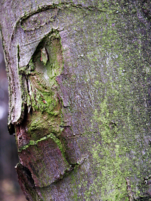 Le Chevalier, Bois de Boulogne, Paris 2003