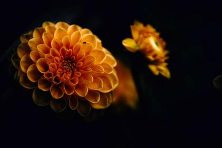 fleurs-jardin-5161.jpg