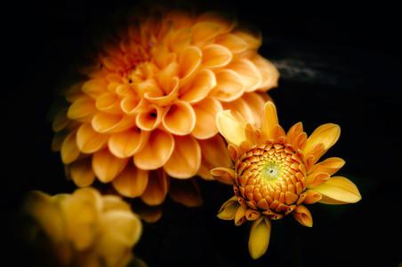 fleurs-jardin-5189.jpg
