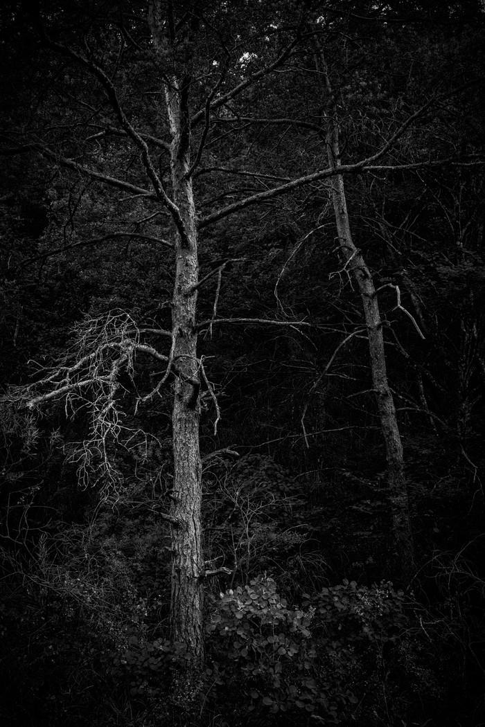 arbres_n&b-2256_Filmpack.jpg