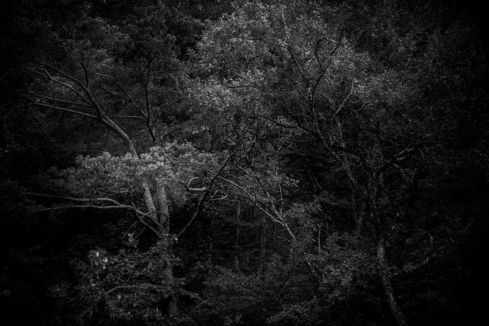 arbres_n&b-2261_Filmpack.jpg
