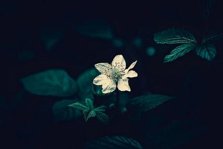 fleur-0003.jpg