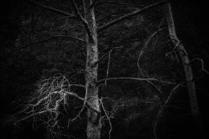 arbres_n&b-2255_Filmpack.jpg