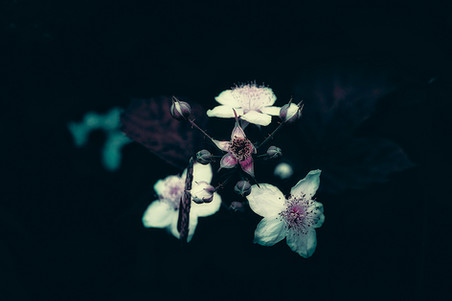 fleur-9961.jpg