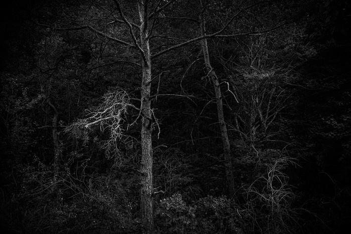 arbres_n&b-2257_Filmpack.jpg