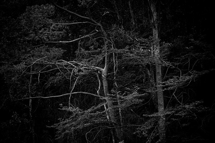 arbres_n&b-2263_Filmpack.jpg