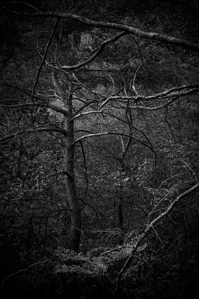 arbres_n&b-2264_Filmpack.jpg