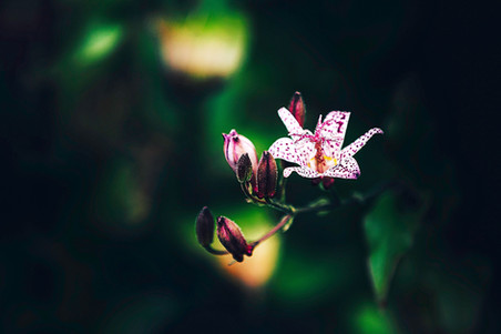 fleurs-jardin-5158.jpg