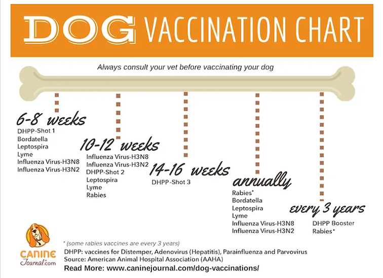 dog vacc chart.png