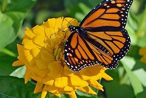 2021 Women Religious butterfly.jpg