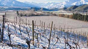 Elabora tu propio vino en Viña In Situ