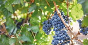 Guía del vino chileno de norte a sur