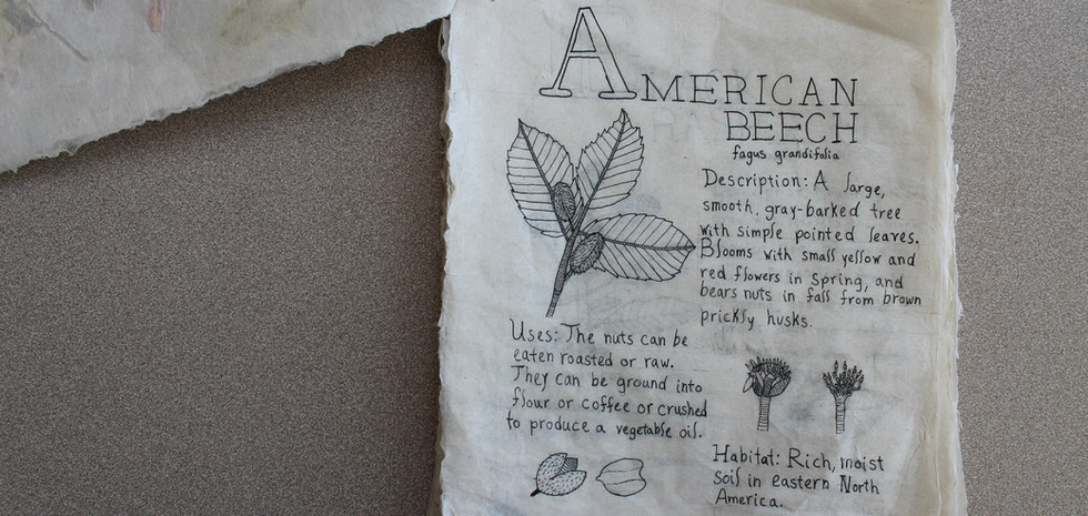 An A-Z of Edible Wild Plants