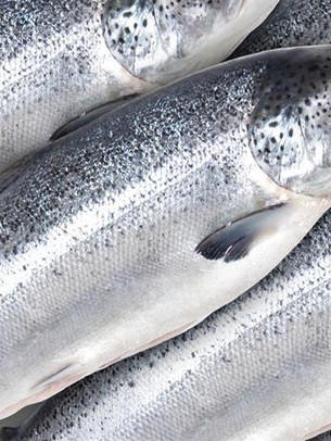 whole canadian salmon.jpg