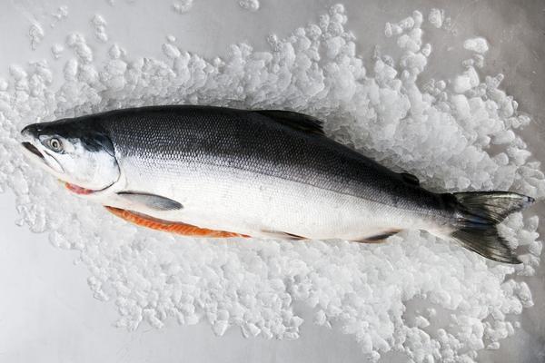whole scott salmon.jpg