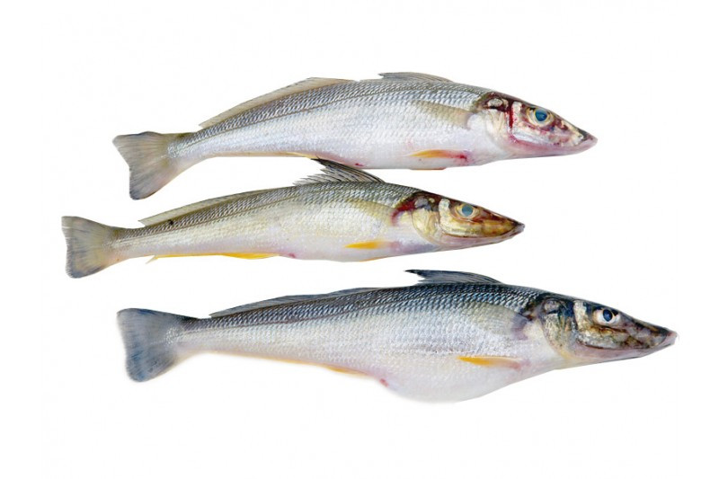whole whiting.jpg