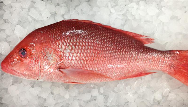 whole red snappers.JPG