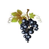 grappe raisin.jpg