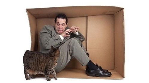 kedi köpek korkusunu eft eğitimi ile yenin