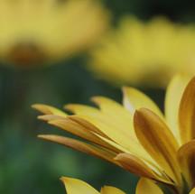 forma de flor