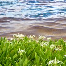 flora @ ocean