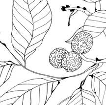perfil hojas