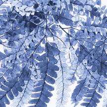 arboleda botanica azul