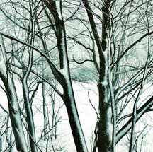 arbol nieve