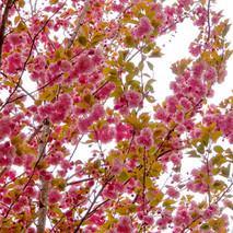 flores primavera 2