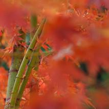 otoño difuminado