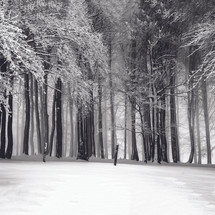 bosque nieve