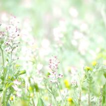 pinceladas de flores