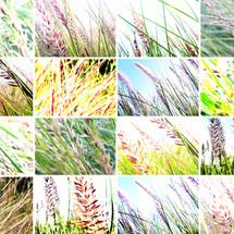 collage naturaleza 1