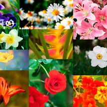 collàge flores